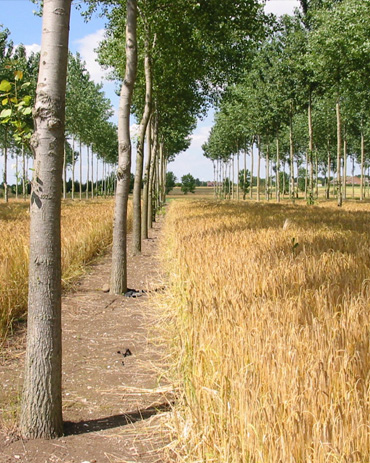 Agroforestry services