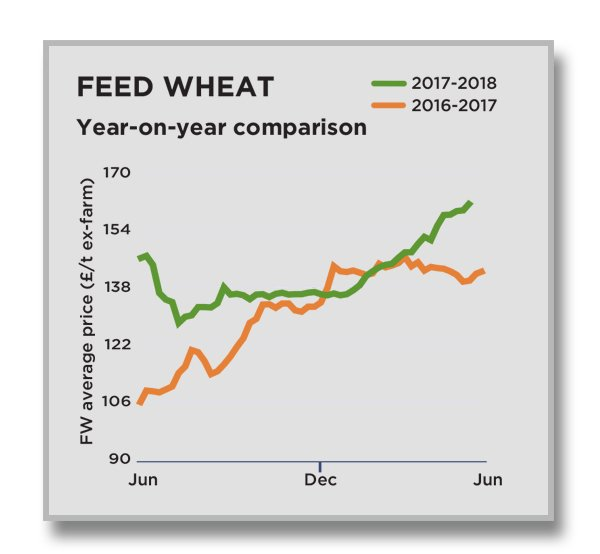 Feed Wheat